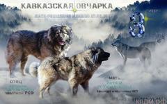Щенки Кавказской овчарки (для выставки/разведения/охраны)