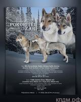 Щенки породы Чехословацкий влчак/Чехословацкая волчья собака